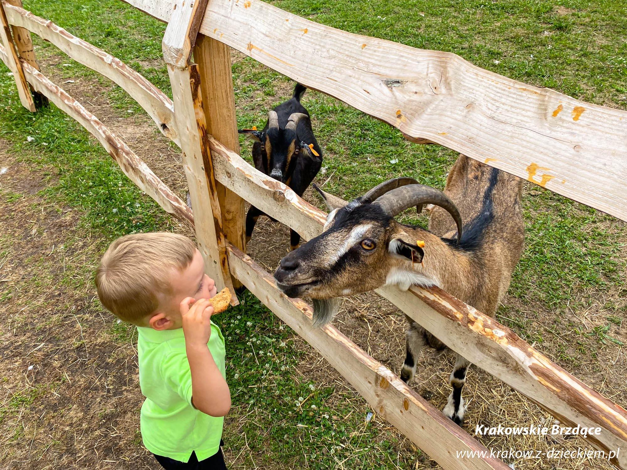 mini zoo okolice Krakowa