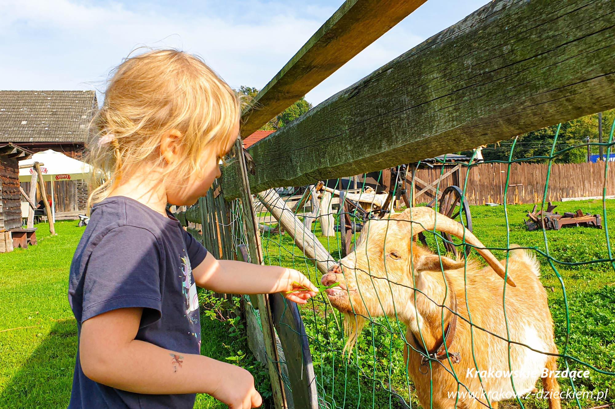 mino zoo restauracja