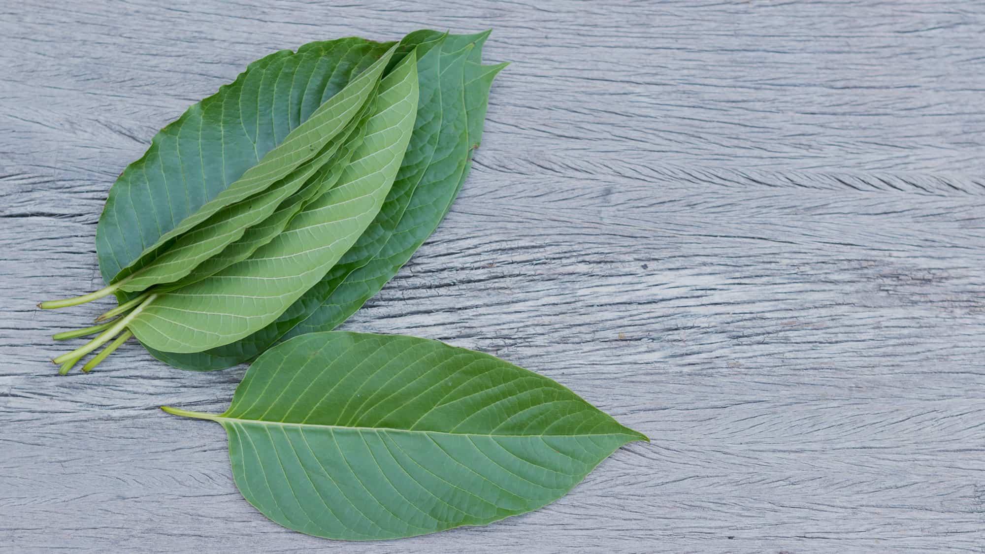 Cinco hojas de kratom encima de una mesa