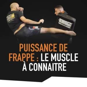 PUISSANCE DE FRAPPE : LE MUSCLE À CONNAÎTRE