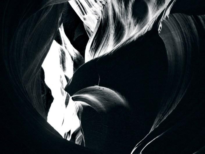 URPA 2017-NoirProjete_Antelope - Cedric Darrigrand - Mimizan Asem Photo