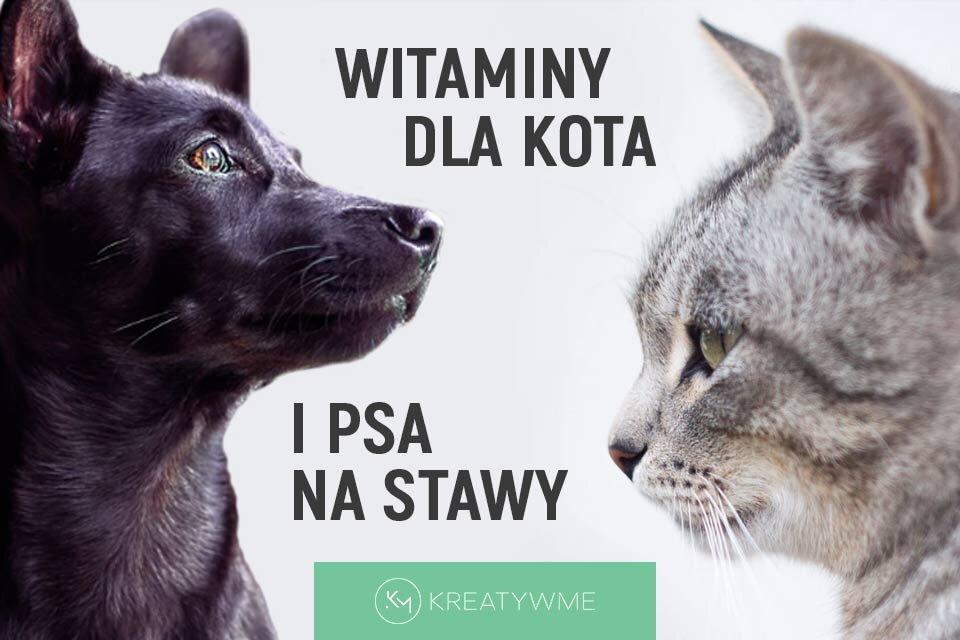 Witaminy dla kota i psa na stawy