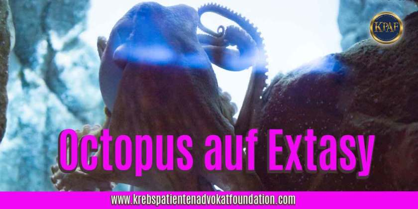 KPAF® Krebs Patienten Advokat Foundation - Oktopus Experiment mit Extasy