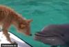 Delfín a pes