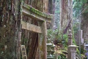 Japan (2015) - Koyasan - Waldfriedhof