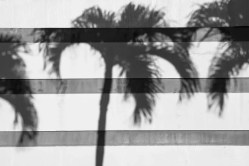Abstract - Palm Trees 02