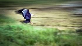 Argentina - Animals - Bird Landing