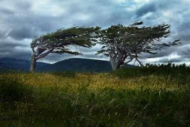 Argentina - Tierra del Fuego - Tree 02