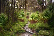 Australia - Tasmania - Cradle-Mountains-Lake St Clair National Park - Bush Walking Track