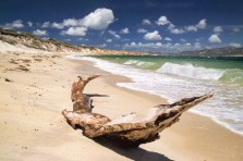 Australia - Tasmania - Flinders Island - Beach with old tree