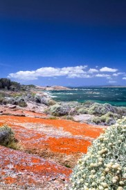 Australia - Tasmania - Flinders Island - South Coast - Coast Line