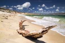 Australia - Tasmania - Flinders Island - South Coast - The Tree