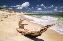 Australia - Tasmania - Flinders Island - South Coast - The Tree