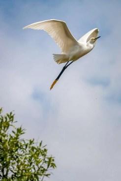 Brazil - Animal - Bird 01
