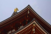 20100505_032625-IMG_8805_ji copy