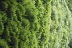 20100511_062210-IMG_0363_ji copy