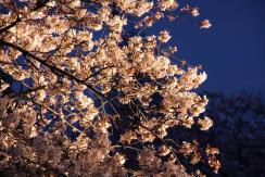 20110407_114403-IMG_3204_ji