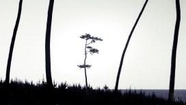 Japan - Tottori - Bäume