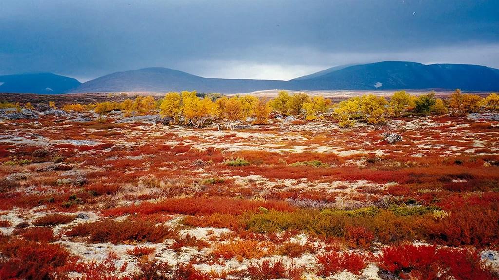 Norwegen - Dovrefjell-Sunndalsfjella National Park