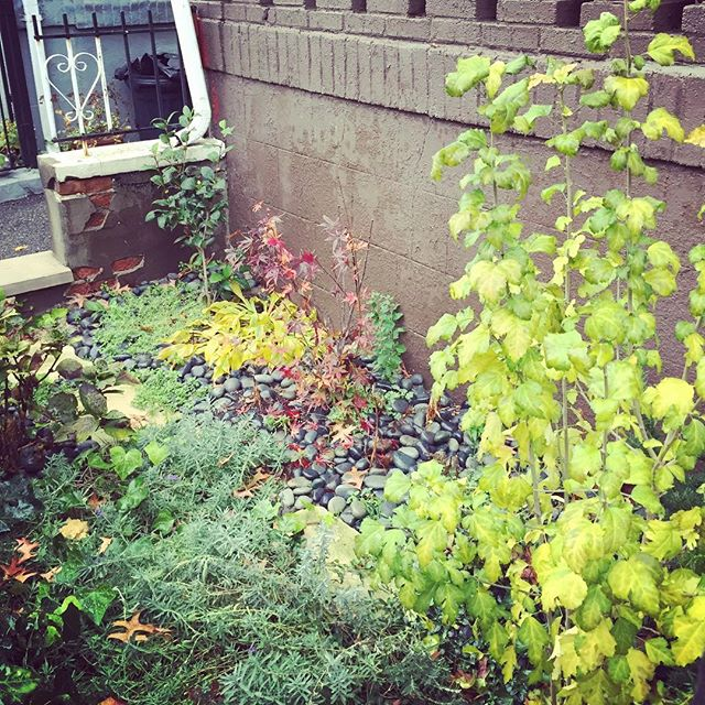 Zen garden in fall colors #flatbushcottage