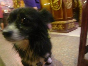 Gigi took many, many pictures of the animals in the market.  This was Bichu, the dog.