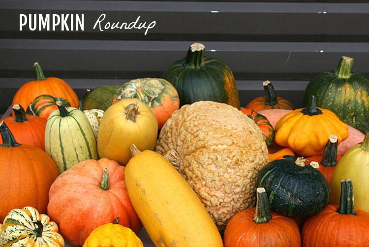 PumpkinRoundup