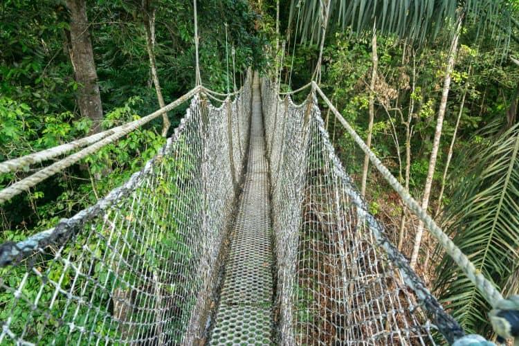 Iwokrama Canopy walkway