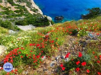 Mesona kloof op Kreta