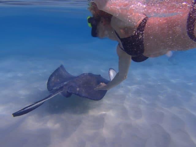 Stachelrochen Ausflug Stingray City Kreuzfahrt Cayman Islands Grand Cayman Georgetown