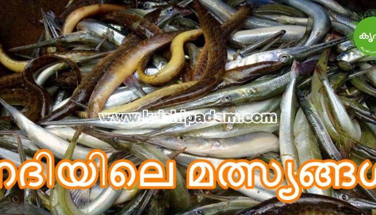 Fish Names Kerala River