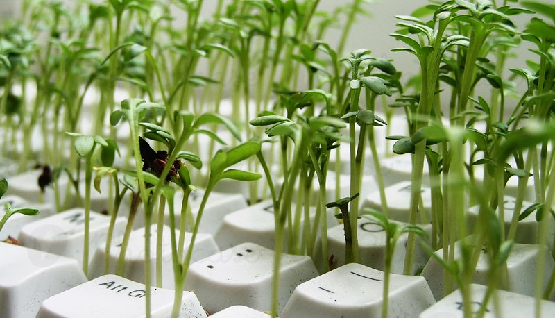 information technology and agriculture