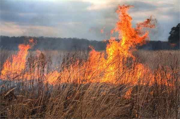hoshangabad fire