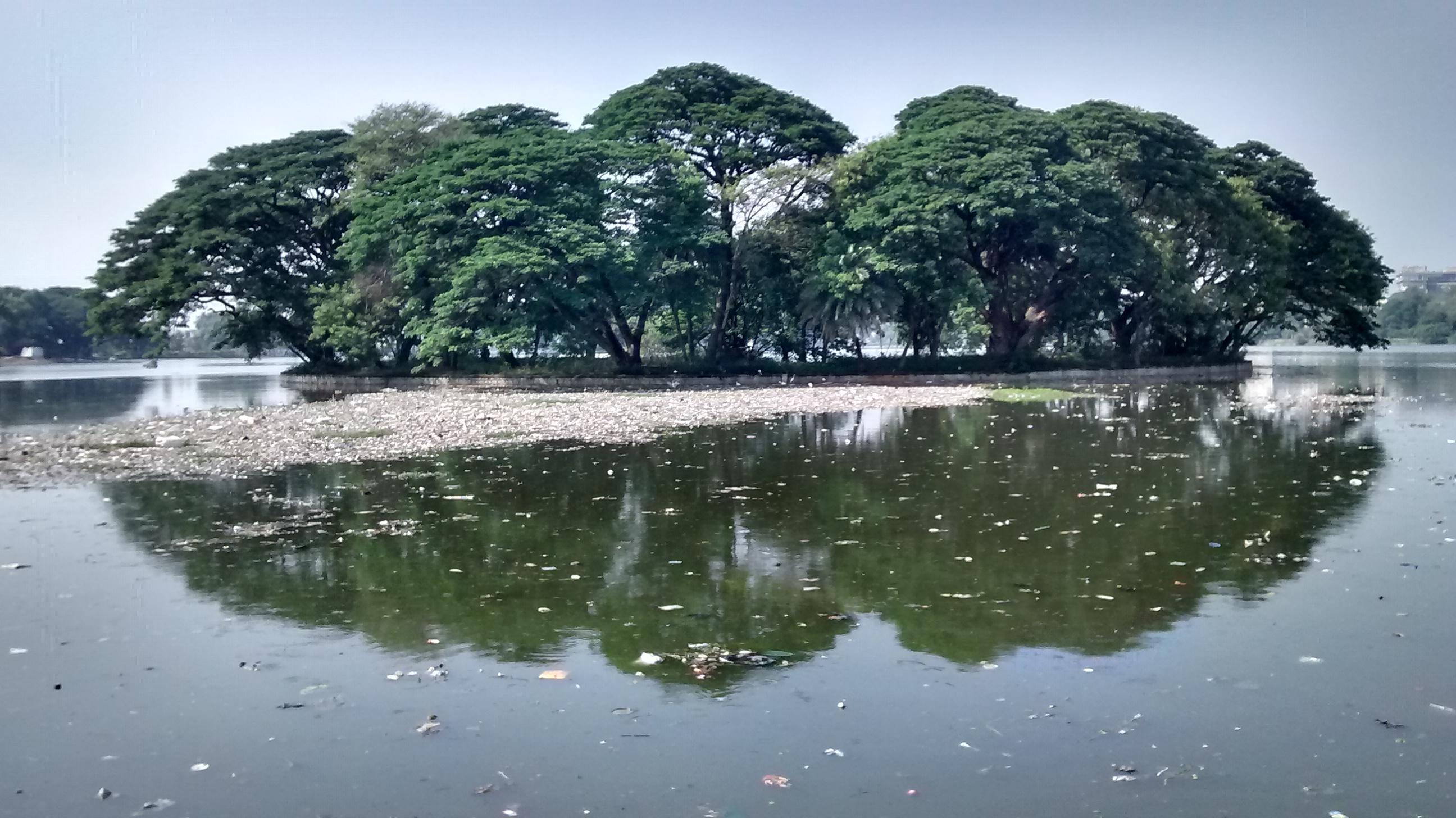 A view of polluted halasuru lake