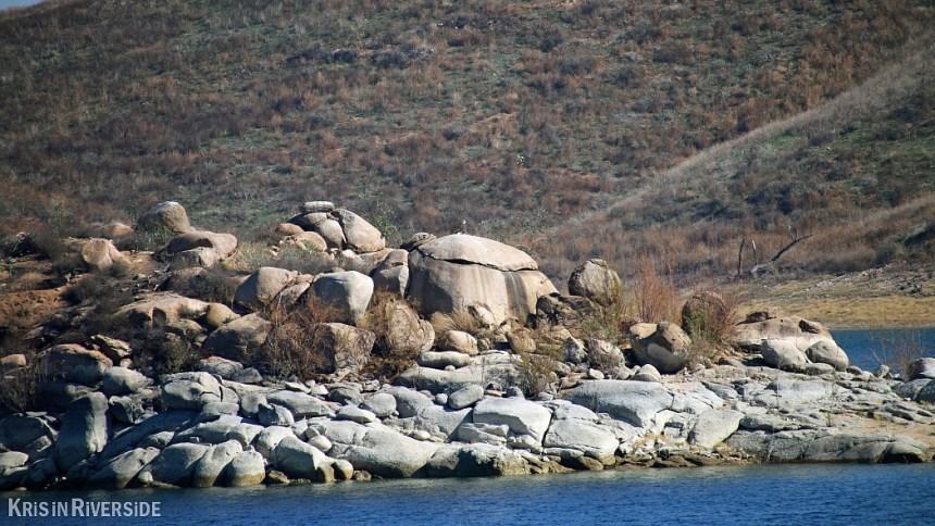Bald Eagle at Lake Mathews