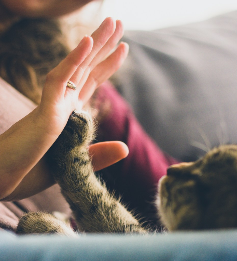 cat touch photo