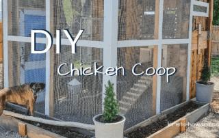 DIY Chicken Coop - krista-howard.com
