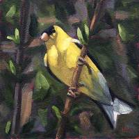Gold Finch #2 small daily art