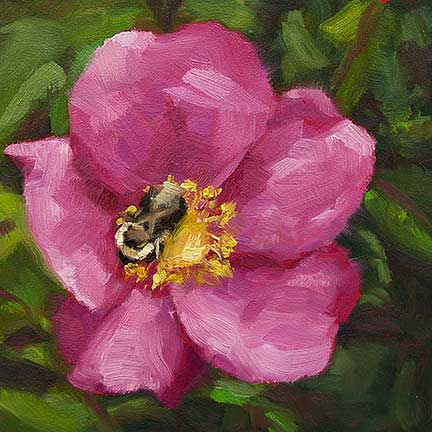 Bumblebee on Rose – day 10 of 30 in 30 days painting challenge