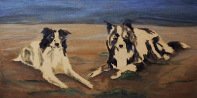 Border Collies - beginning of block in