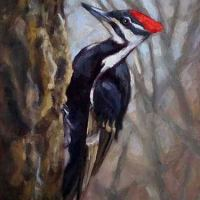 Pileated Woodpecker oil painting by Krista Hasson