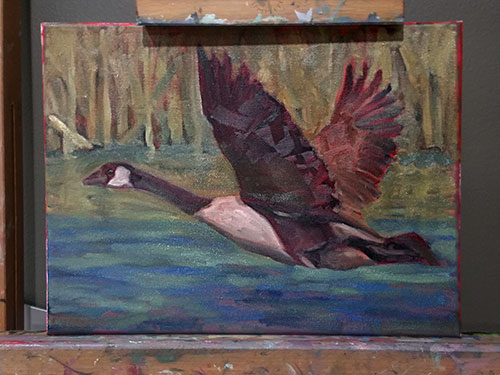 A Canada Goose is on my Easel