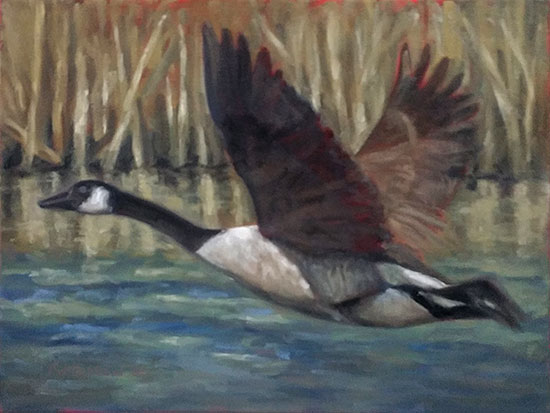 Canada Goose Oil Painting Update