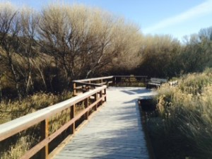 "One of many ""outlook"" areas set off the main boardwalk trails"