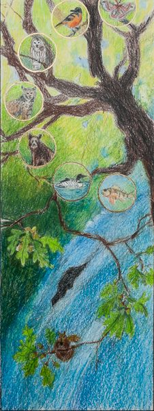 Pencil Sketch Oak Forest