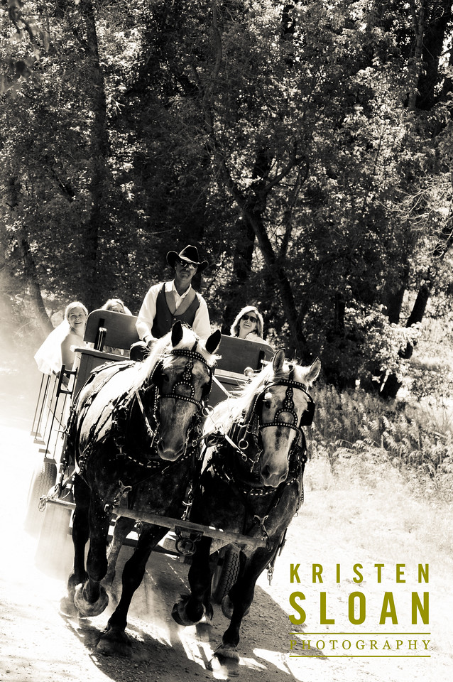 percheron horse carriage wyoming ranch wedding