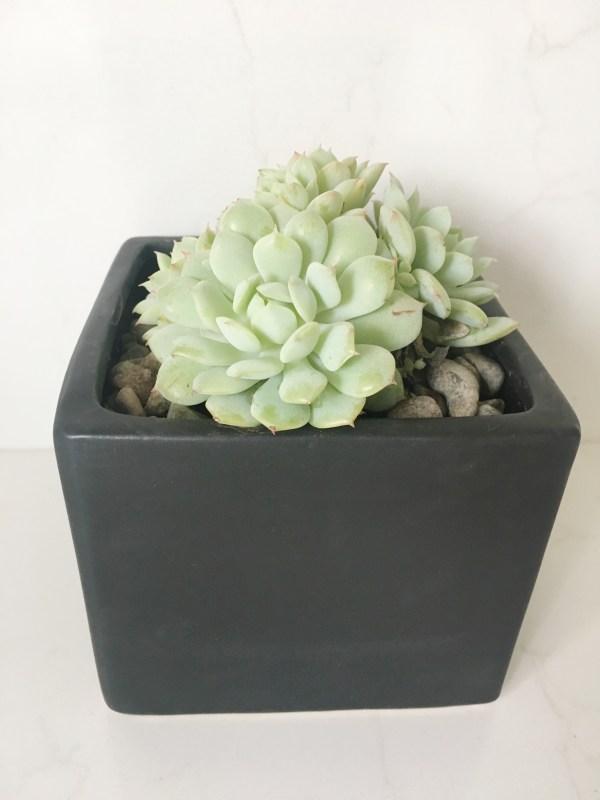 square black planter