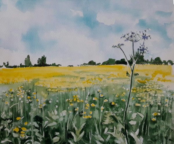 Summer field in watercolour