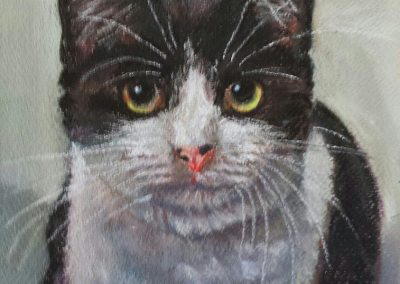 Black and white cat – pastel on paper