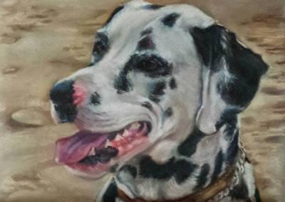 Dalmatian – pastel on paper