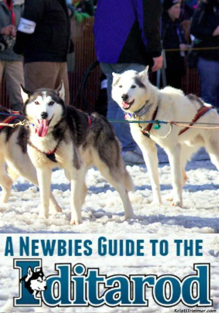 A Newbies Guide to the Iditarod - Vertical